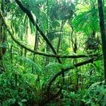 jungle250x150