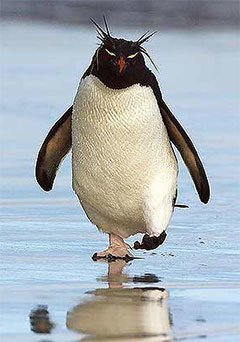 Google Pingvin opdatering